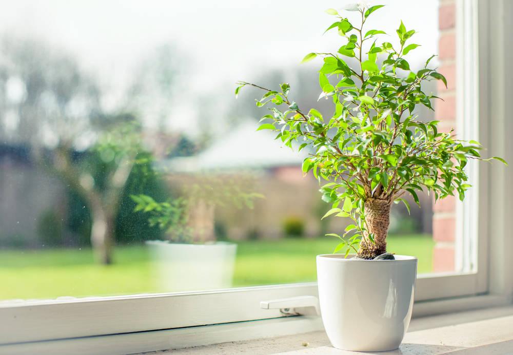 Energy-Efficient Windows vs. Regular Windows